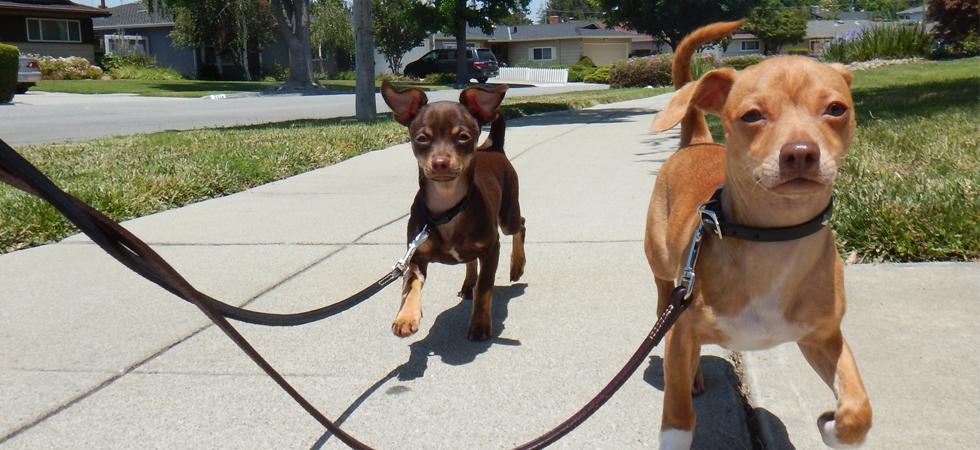 medium led dog collar